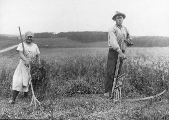 Høstarbejde øster hornum lokalhistorie