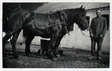 Far og 2 heste