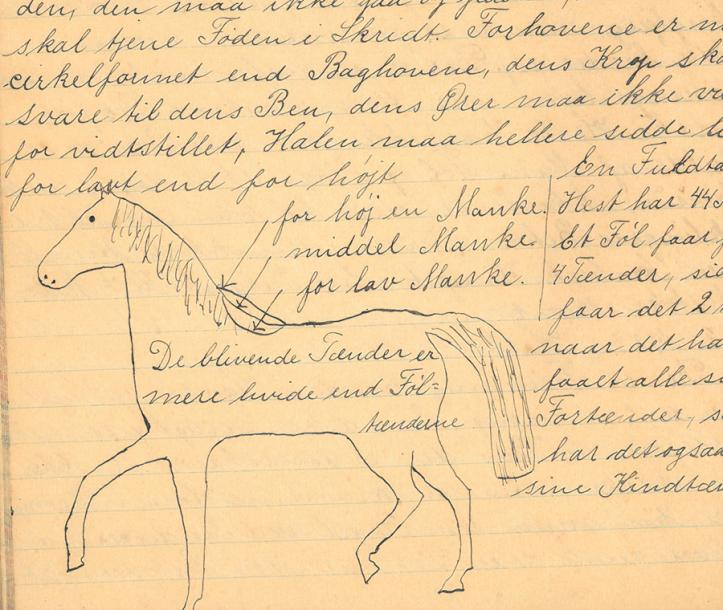 Hest Børkop