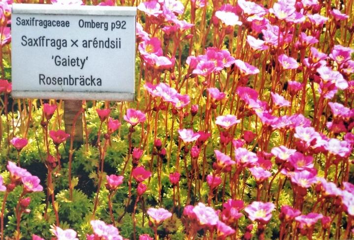 Besøg i Botanisk have