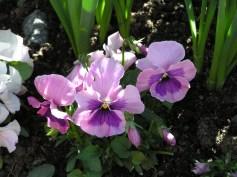 Der er altid smukke blomster