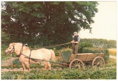 Far med kun en hest