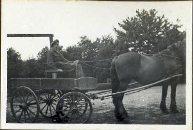 Horse cart - transport