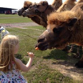 kamelen-fodres