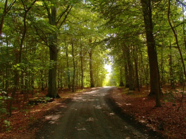 Asnæs skovvej