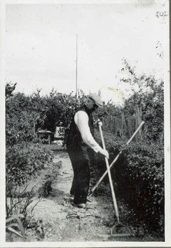 Emry på havearbejde