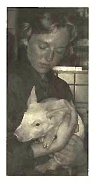 Nænsom transport af grise på Foulum