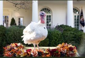 PEAS pardoned turkey White House