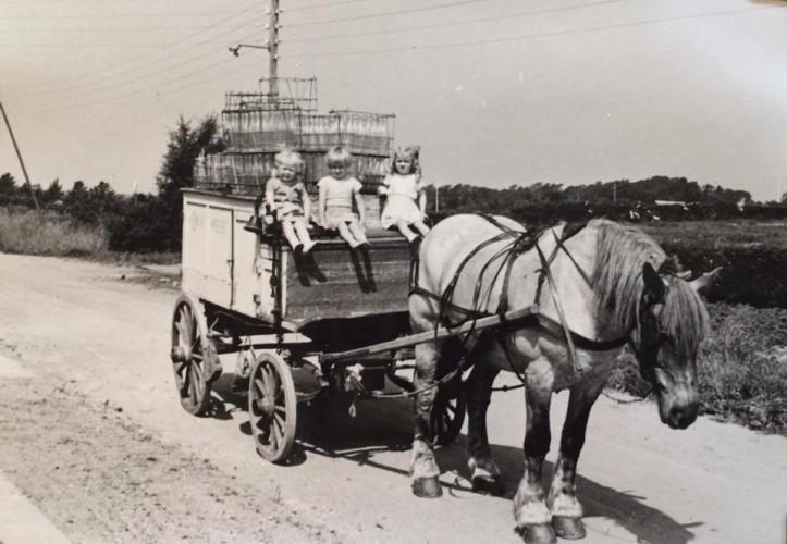 Mælkevogn og hest