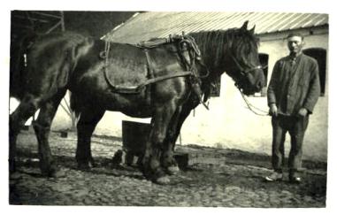 Risgård Far og hestene hjem fra marken