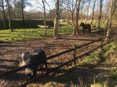 Heste ved Nybo